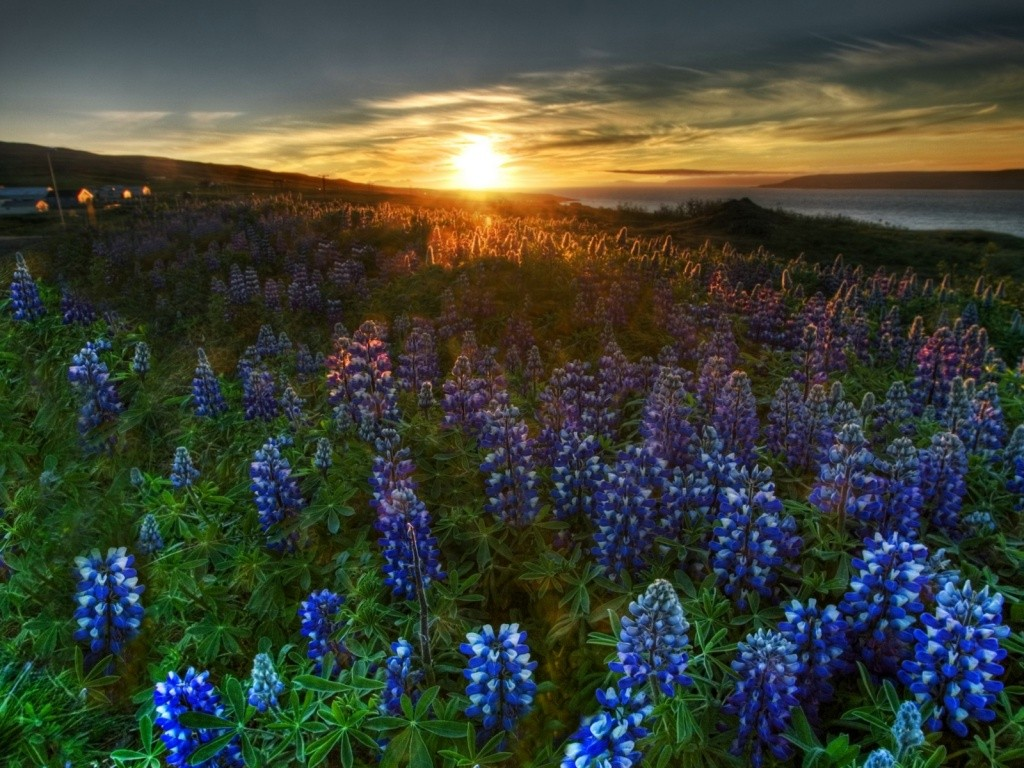 flowers-in-the-field9-widescreen-full-high-quality-free-ireal-nature-wild-wallpaper